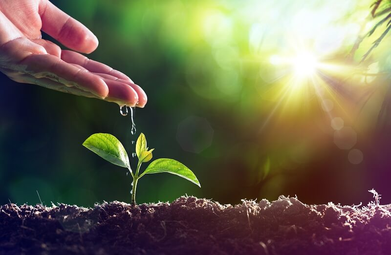 Adhesion is required to draw water from the soil to plant leaves