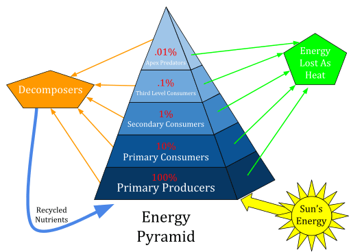 Ecological pyramid | pyramid of numbers with diagram | biology.