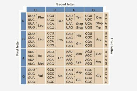 Genetic Code Chart
