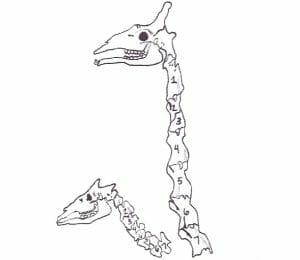 A giraffe's long neck
