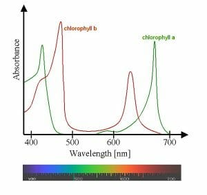 Chlorophyll ab spectra