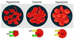 Osmotic pressure on blood cells