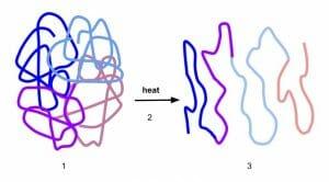 Process of Denaturation
