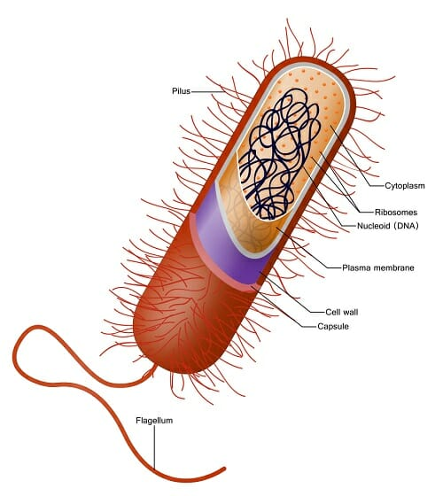 prokaryotic cell - definition, structure, characteristics and