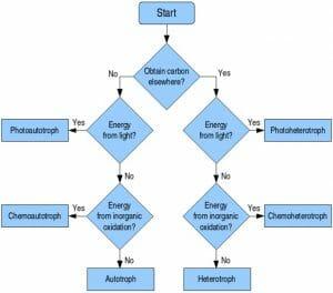 Troph flow chart