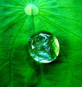 Water drop on a leaf