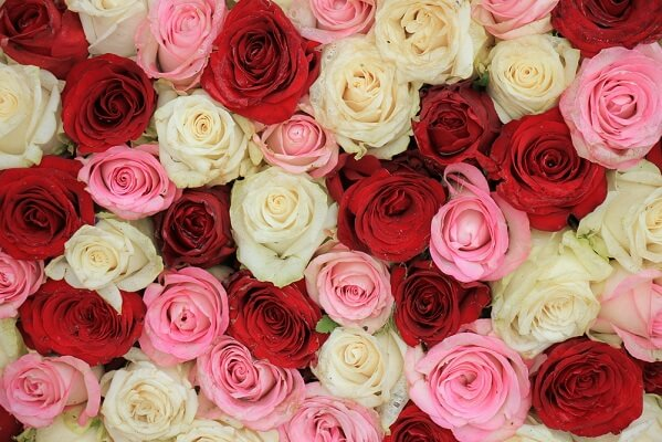 Flowers with pink petals are an example of incomplete dominance, whereas flowers with both red and white petals are an example of codominance.