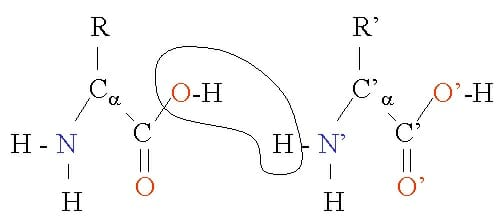 definition of dehydration synthesis What is the difference between dehydration synthesis and hydrolysis dehydration synthesis reaction forms a water molecule hydrolysis reaction consumes.