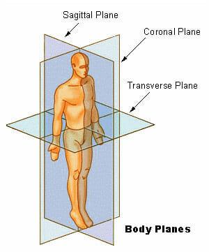 anatomical position definition and function biology. Black Bedroom Furniture Sets. Home Design Ideas