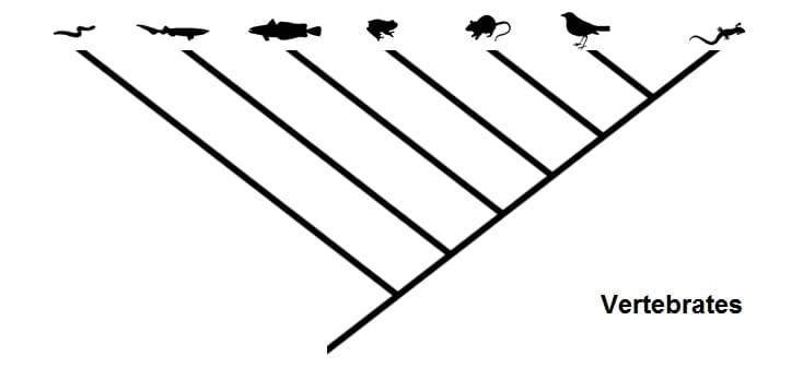 How To Do A Cladogram