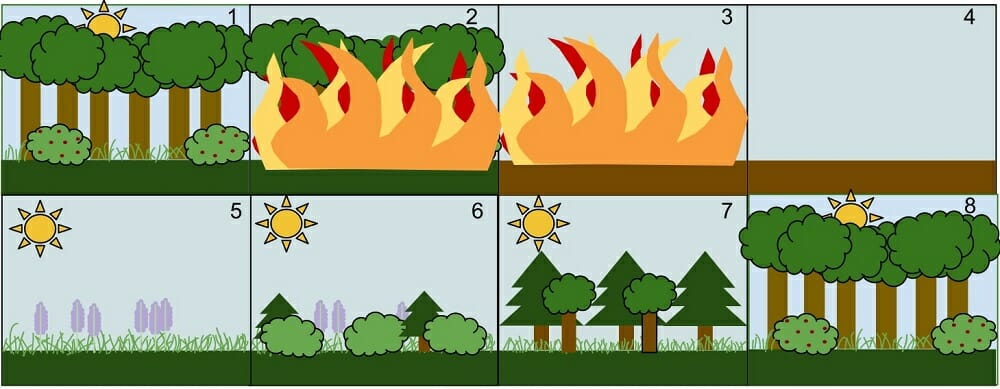 Ecological Succession Definition Types And Examples Biology