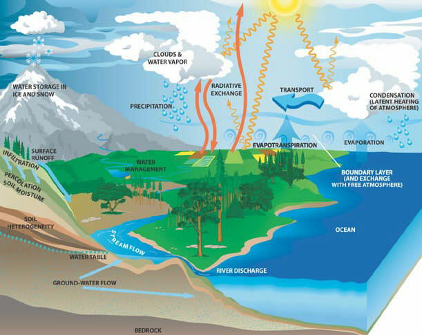 Transpiration definition and function of the water cycle biology this diagram shows the earths water cycle thecheapjerseys Images
