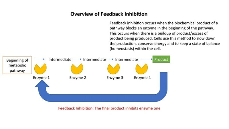 negative feedback diagram metabolic waste