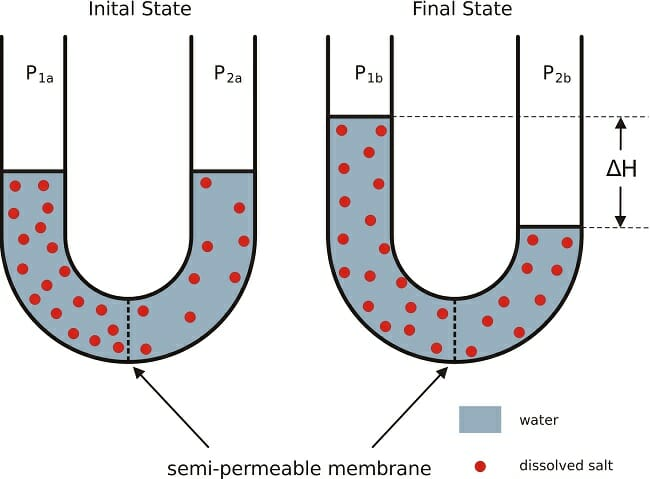 Semipermeable Membrane Definition And Examples Biology Dictionary