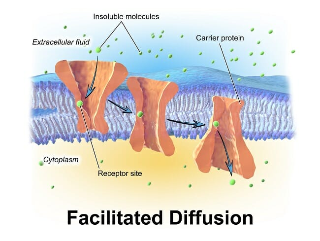Diffusion - Definition, Examples, Types and Functions