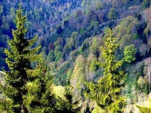 Forest in Turkey