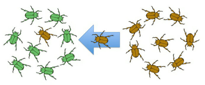 Microevolution - Definition, Examples and Quiz | Biology ...