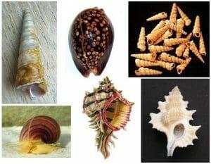 Apogastropoda various