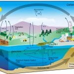 What Do Biogeochemical Cycles Connect?