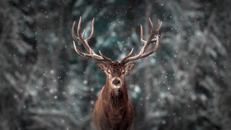 A deer is an example of a heterotroph