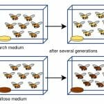 What Does Allopatric Speciation Require