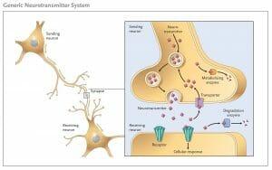 Generic Neurotransmitter System