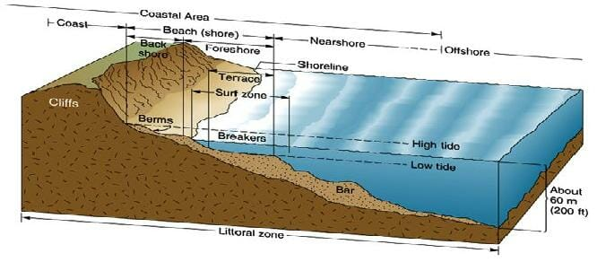 Littoral Zone Definition Organism And Quiz Biology Dictionary