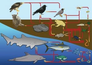 Marine system food web diagram