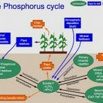 Purpose of the Biogeochemical Cycles