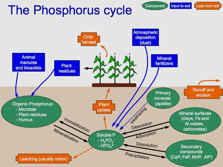 Purpose Of The Biogeochemical Cycles Biology Dictionary