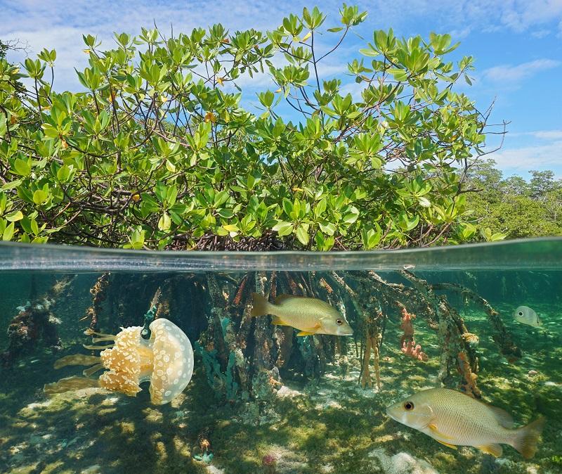 Abiotic and biotic factors both impact pond ecosystem