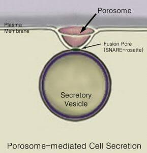 Porosome