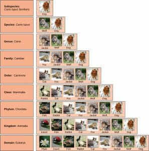 Taxonomic classification