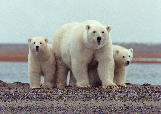 Tundra Biotic Factors | Biology Dictionary