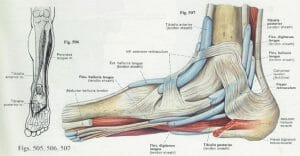 Medial aspect of the foot