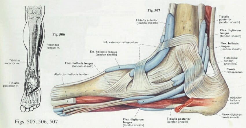 Medial Foot Ligaments Diagram - House Wiring Diagram Symbols •
