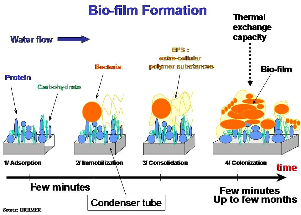 Biofilm - Definition, Function and Structure | Biology