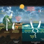 How Are Oceans Involved in the Carbon Cycle