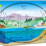 Carbon Cycle Reservoirs