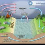 What Role Do Producers Play in the Carbon Cycle