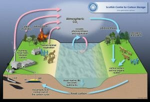 Carbon cycle full