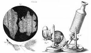 Hooke Microscope cork