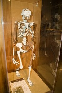 Lucy Skeleton
