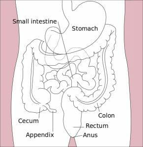 Stomach colon rectum diagram