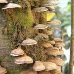 Importance and Roles of Decomposers