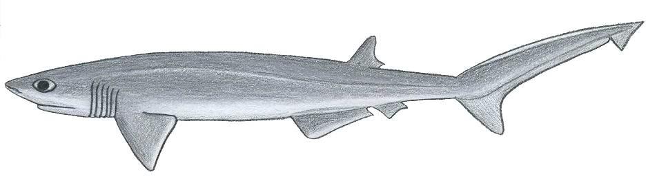 Fish Dichotomous Key Biology Dictionary