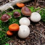 Difference between Detritivores and Decomposers