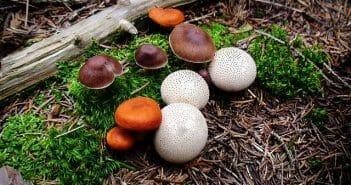 Mushrooms in Elatia forest