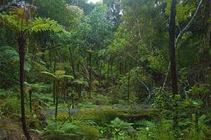 Ulva Island rainforest