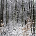 Deciduous Forest Temperature and Precipitation